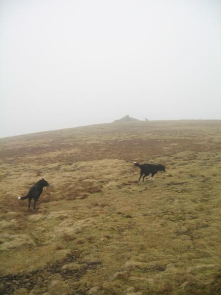 Pippa finds a friend on the way to the summit