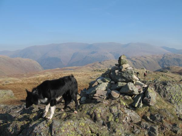 Pippa on Calf Crag with the Helvellyn range beyond