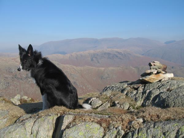 Pippa on Tarn Crag summit (I think?) with Steel Fell and the Helvellyn range beyond