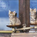 cats-on-scales