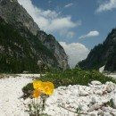 Wild poppies in the river bed in Pian delle Comelle.