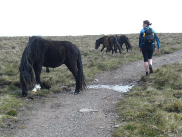 Rachel nudges some wild horses off the path.