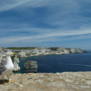 Limestone Cliffs from Bonifacio