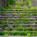 Flower covered steps.