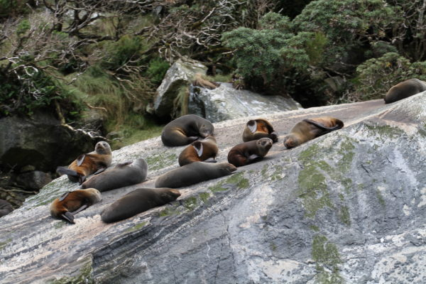 Seals sunning themselves in the Sound