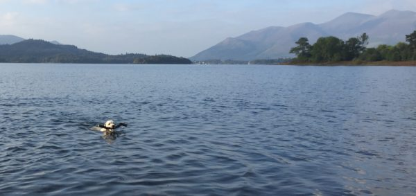 Zac having a swim in Derwentwater